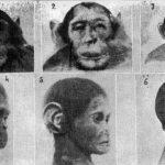 НЕКОНТРОЛИСАНА НАУКА: експерименти за стварање хибрида човека и животиње